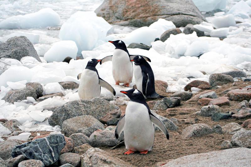 ペンギン 村